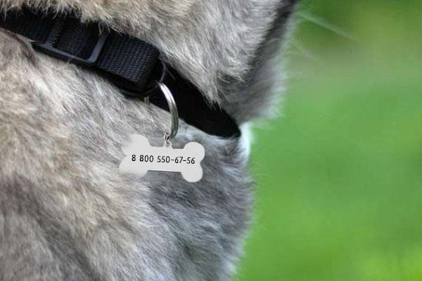 Жетон для собаки Косточка