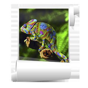 Широкоформатная цветная печать изображений