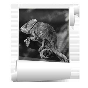Широкоформатная черно-белая печать изображений